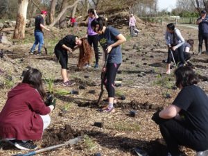 Otakaikino Planting Day