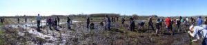 Travis Wetland Planting